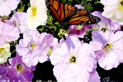 Petunias & Butterfly